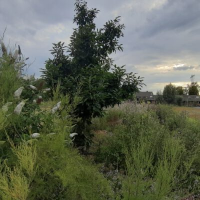 Groene hoek in paddock paradijs